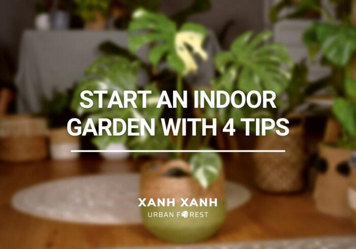Start-a-DIY-indoor-garden-with-4-important-tips