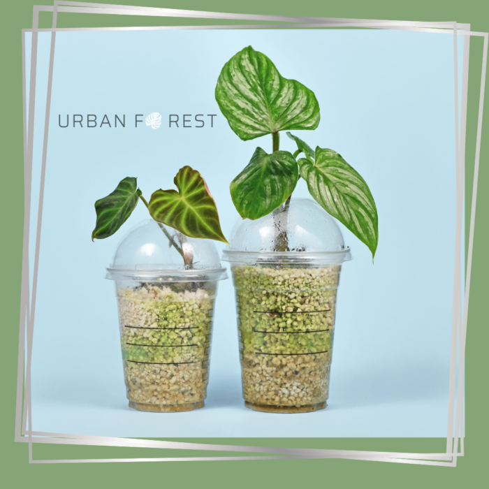 Perlite improves the plant's ability to drain