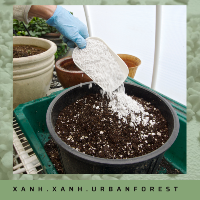 Perlite and soil mix